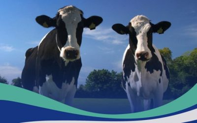 Researchers call for NSW dairy farmers