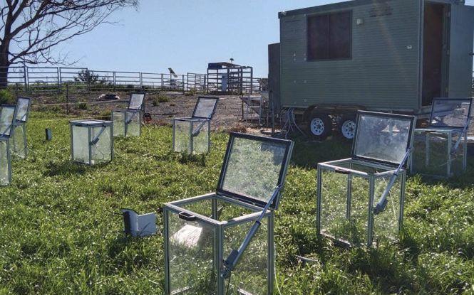 Carbon neutral Kikuyu pasture systems